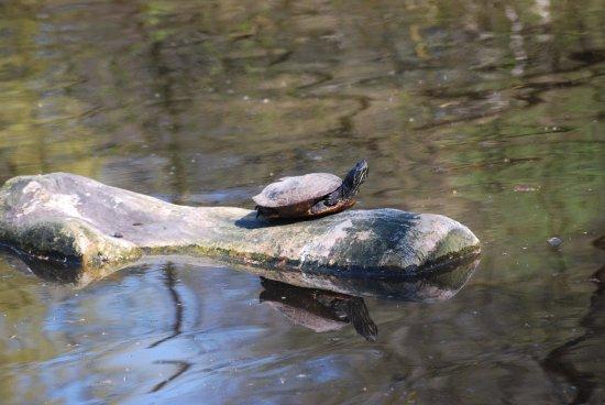 Gradignan, Frankrig: et même des tortues