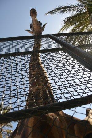 Stella Canaris Zoo: Preciosa