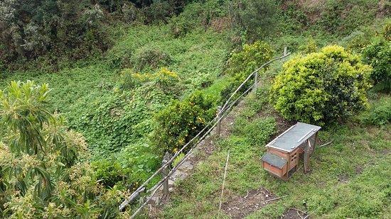 Casa Cha Miquela: La huerta y el gallinero