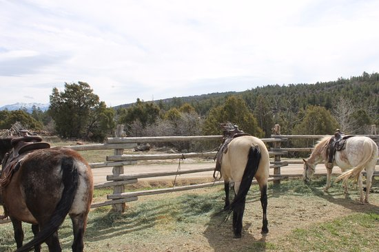 Telluride, CO: horses we rode