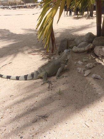 Plaza Resort Bonaire : photo1.jpg