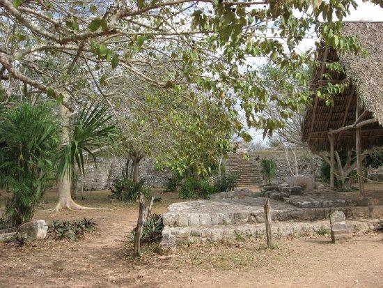 Temozon, Mexico: la nature