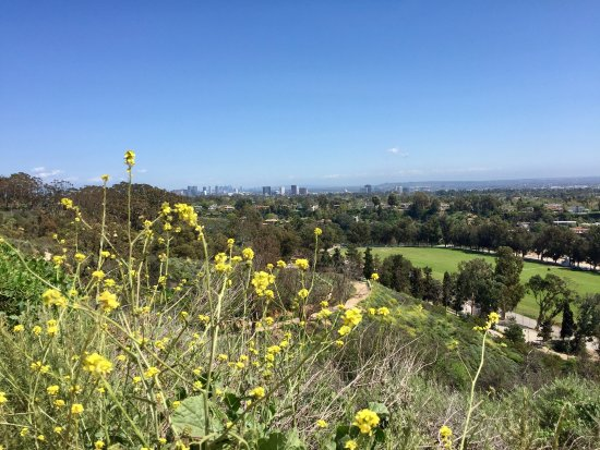 Will Rogers State Historic Park: Blooming flowers, the polo field, and DTLA in the distance