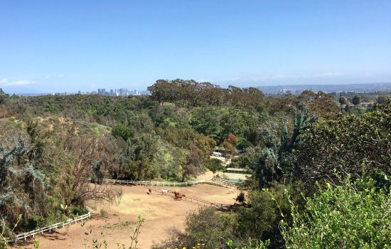 Will Rogers State Historic Park: Horses boarded on property with DTLA in the distance