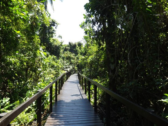 Cahuita, Costa Rica: Boardwalkk