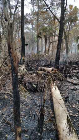 DeLand, FL: recent burn area