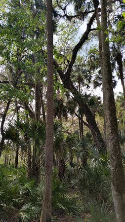 DeLand, FL: view on the trails