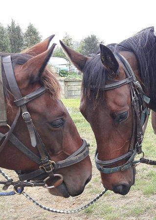 Huntaway Farms Horse Trekking