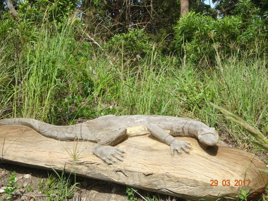Korora, Australia: One of the carvings along the walk