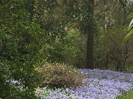 Tiverton, UK: Spring colours