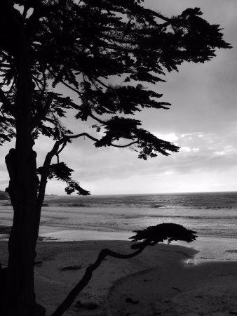 La Playa Carmel: the beach at Carmel