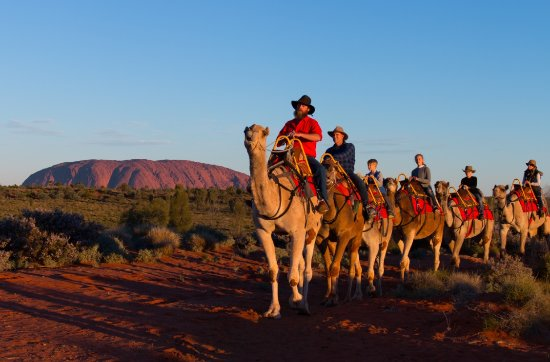 Territorio del Nord, Australia: Uluru Camel Tours