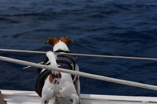 Tranquilo Sailboat Cruise: Buster looking for Flying Fish