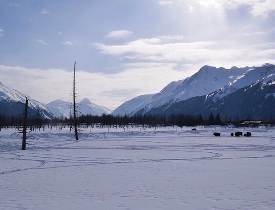 Girdwood, AK: photo2.jpg