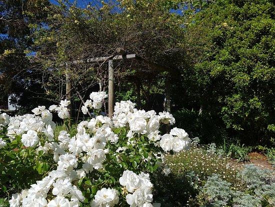 Pinjarra, Úc: Old Blythewood - flowers and trelis