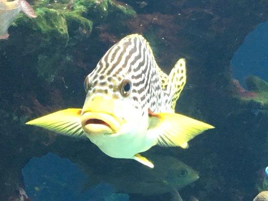 Aquarium des Lagons Nouvelle Caledonie: photo0.jpg
