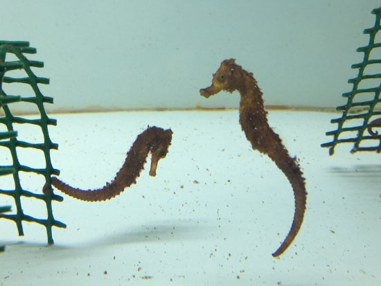 Aquarium des Lagons Nouvelle Caledonie: photo1.jpg