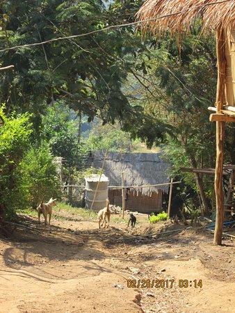 Maekok River Village Resort: Mountain Village
