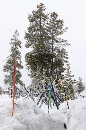 Old Faithful Snow Lodge and Cabins Photo