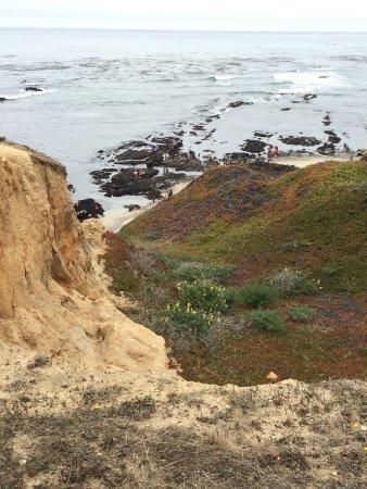 Moss Beach, Kalifornien: Overlooking the harbor seals