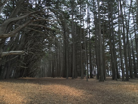Moss Beach, CA: Magical tree grove