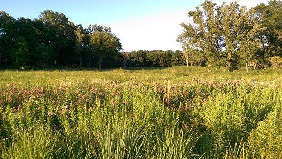 Lake Forest, IL: savanna restoration