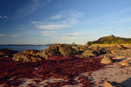 On the Beach B & B: Surrounding areas...red algae