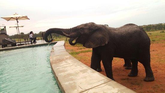 Welgevonden Game Reserve, Sudáfrica: 20170215_184436_large.jpg
