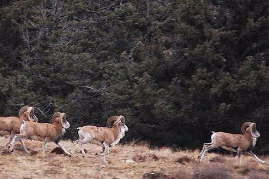 Fars Province, Iran: Bamou National Park