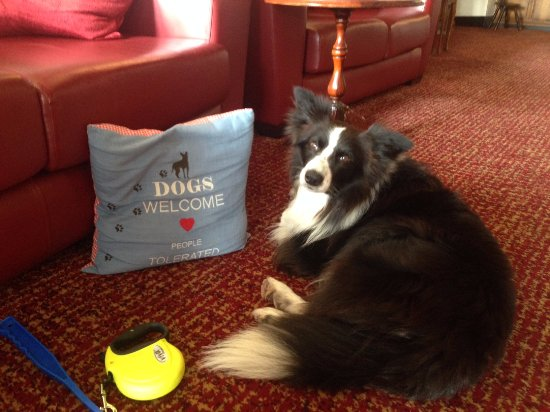 Skelwith Bridge Hotel : Dogs welcome People tolerated - that sums it up :)