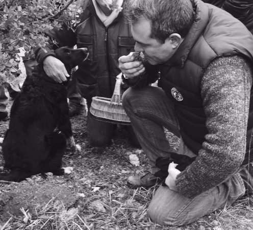 Trémolat, Francia: Max truffle hunting with M.Aynaud and the beautiful border colie, Farah