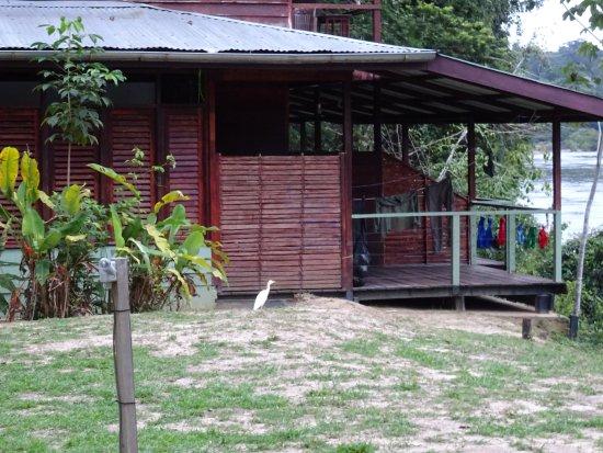 Suriname: Fungu kamp met egret