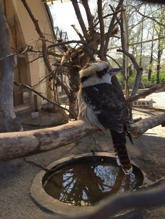 Budapest Zoo & Botanical Garden: photo0.jpg