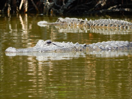 Everglades City, FL: Close enough...