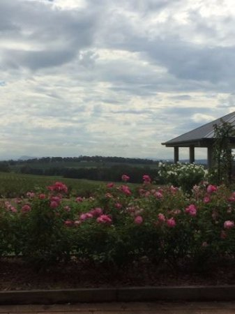 Newcastle, Australien: Beautiful flowering scenery & fresh air