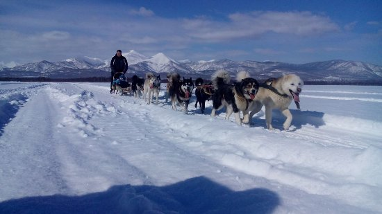 Koryak Nomads Camp Eyvet and Nursery for Sled Dogs of Andrey Pritchin