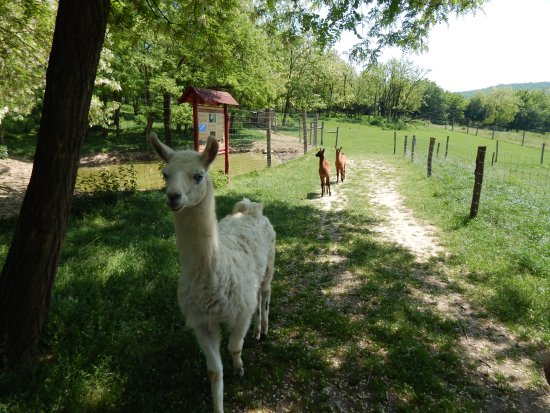 Bőszénfa Deer Farm - Petting Zoo