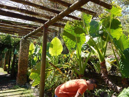 Pergola plants, Fairchild gardens, Miami - Picture of Fairchild ...