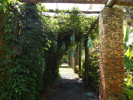 Jade vine, Fairchild gardens, Miami - Picture of Fairchild Tropical ...