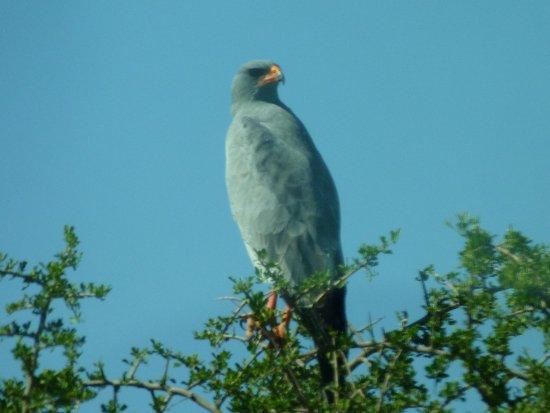 Addo, South Africa: Predator