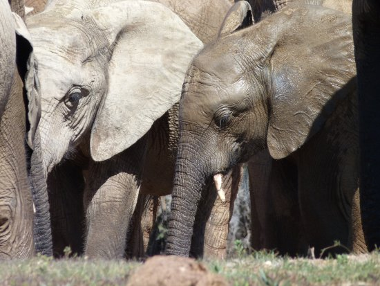 Addo, South Africa: Thanks for the shower, Mum.