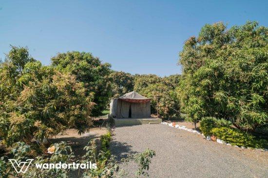 Gir Paradise - A Wandertrails Showcase