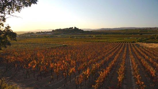 Wine & Nature