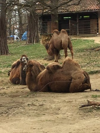 Zoo Brno : photo1.jpg