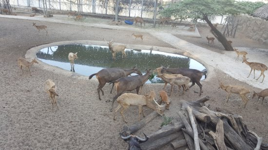 Zoo and Botanical Gardens: deers