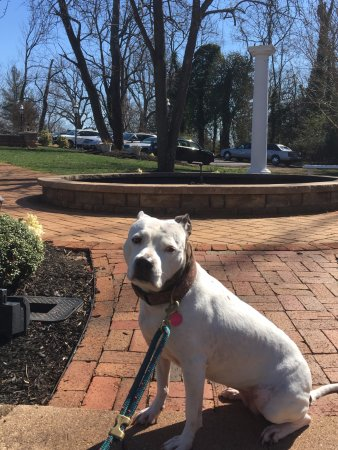 Orange, VA: Sierra loved the sunshine outside in the beautiful backyard