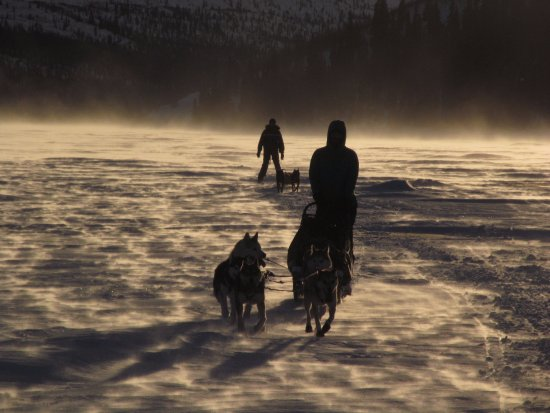 Whitehorse, Canadá: Crossing Fish Lake by dog team.