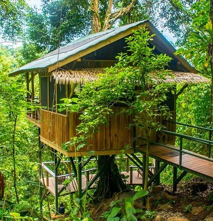 El Fenix treehouse