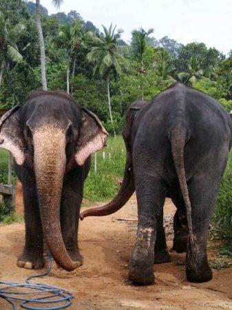 Kegalle, Sri Lanka: Seetha and Raja