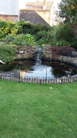 The Sea Spirit Guesthouse: Koi pond